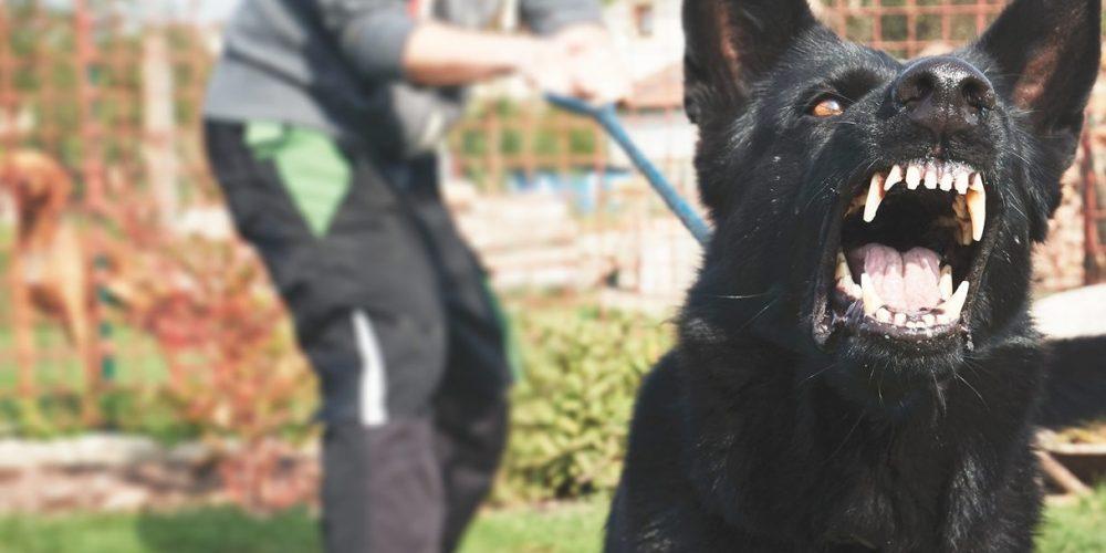Foto de un perro tirando de la correo porque amenaza con atacar a otros perros