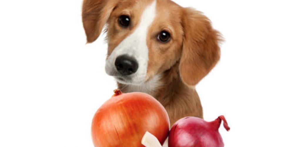 Foto de un perro junto a distintos tipos de cebolla
