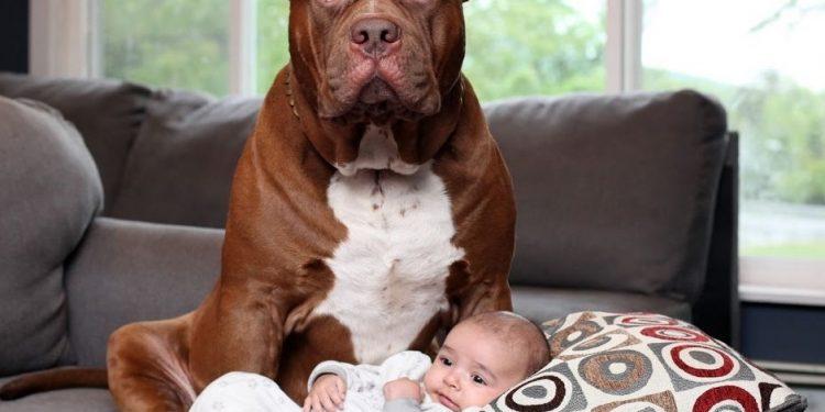 Foto de un perro protegiendo a un bebé