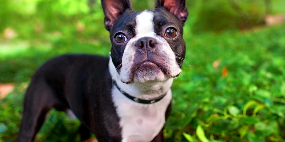 Foto de un perro pequeño en el jardin