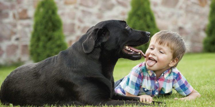 es Las Niños Redcanina Razas De Cuáles Perros Para Mejores Son wkiTPZuXO