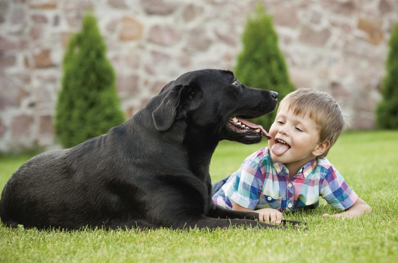 Foto de un perro junto a un niño pequeños tumbado en el cesped