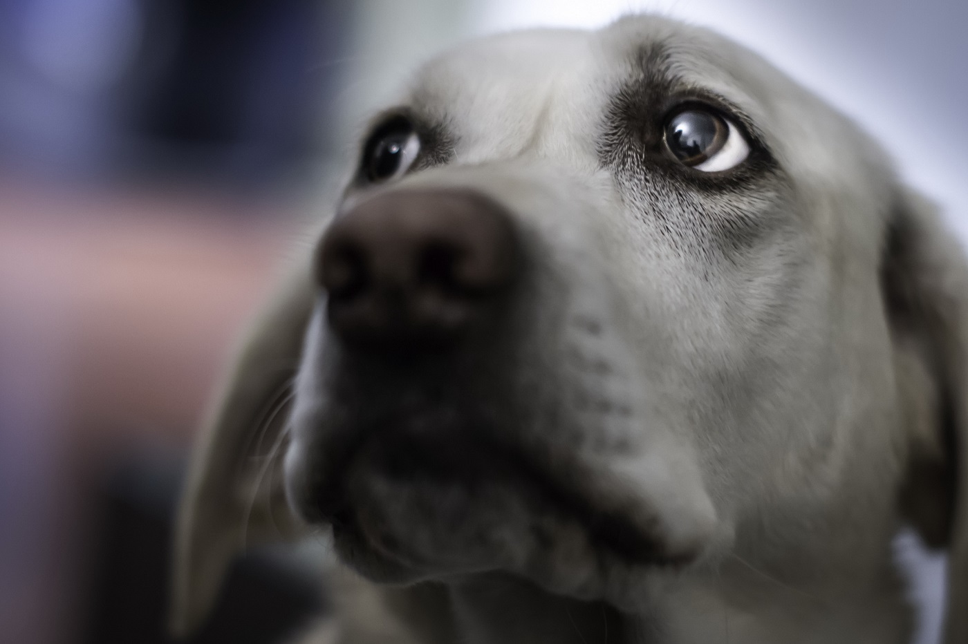 Foto de una perra muy triste tras su epoca de celo