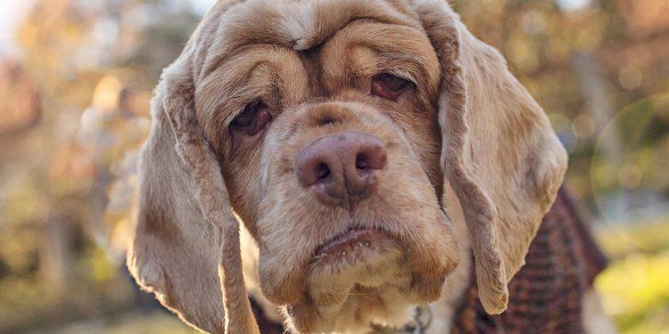 Foto de un perro viejo