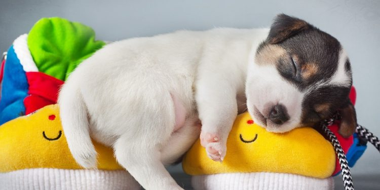 perro-durmiendo-mucho-750x375.jpg