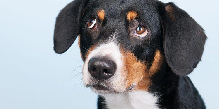 Perro con cara de triste esperando a ser adoptado