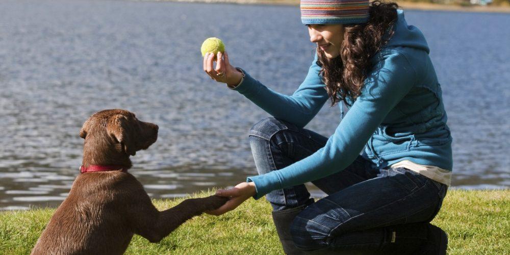 Foto de una chica enseñando a su perro a dar la pata