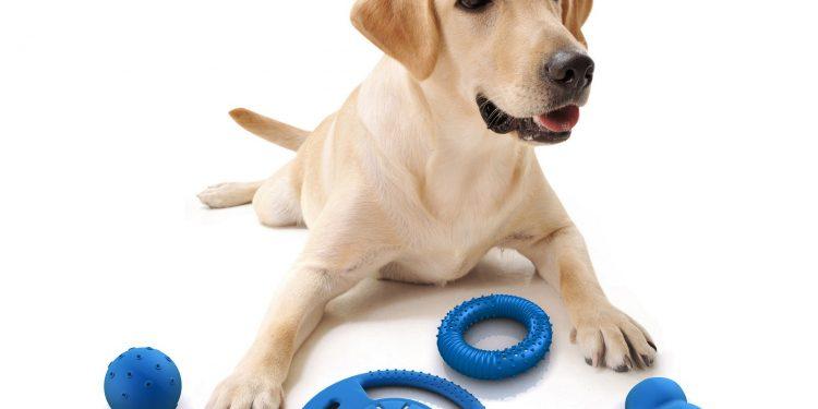 Foto de un perro con muchos juguetes