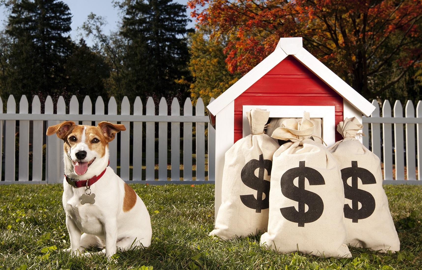 Foto de un perro con bolsas de dinero junto a su caseta
