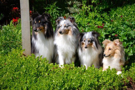 Foto de 4 perros de tamaño medio esperando junto a un poste