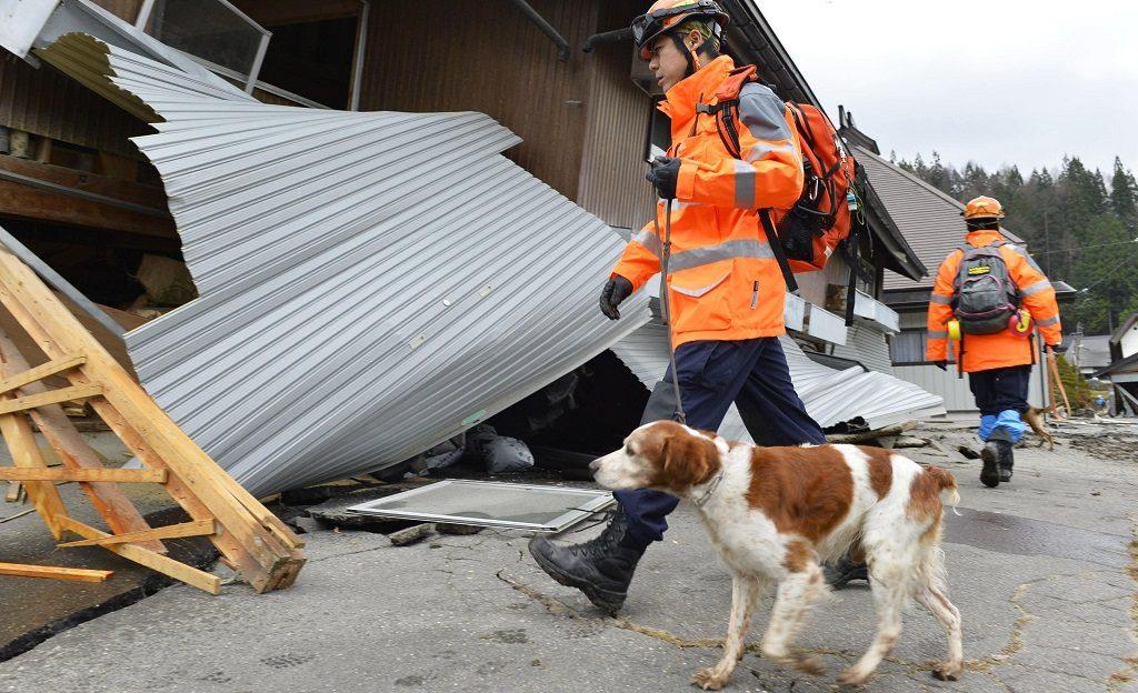 Perro con su cuidador del equipo de emergencias buscando desaparecidos tras un terremoto