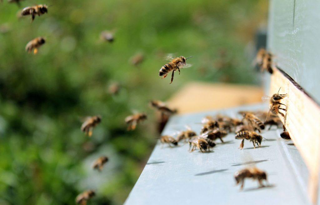 Foto de un panal de abejas