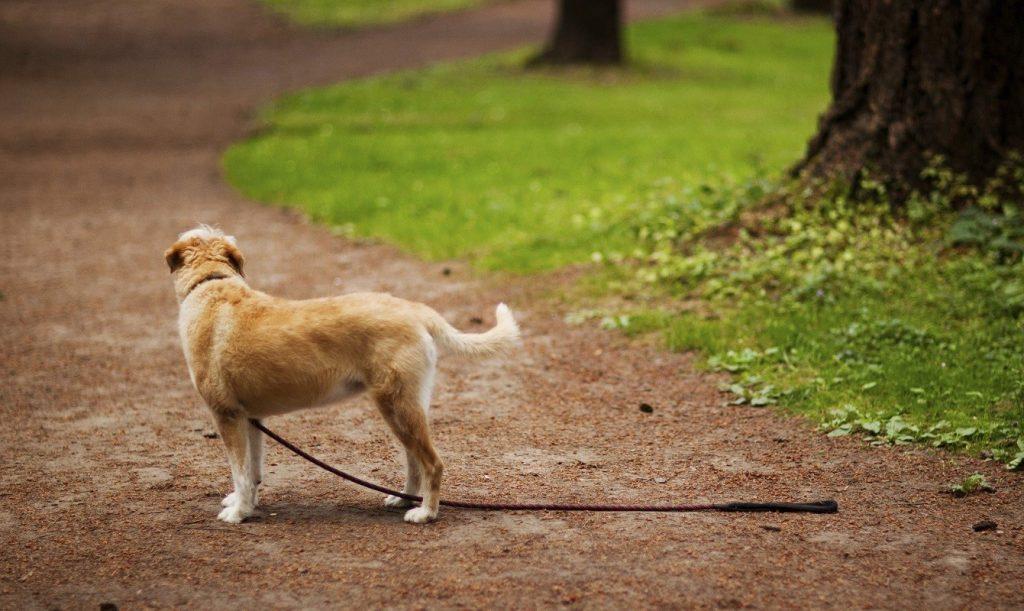Foto de un perro esperando a su dueño pero que se ha perdido en medio del bosque durante un paseo