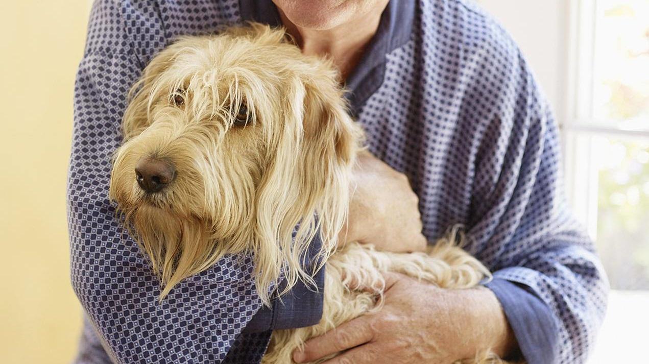 Foto de un perro viejo en brazos de su dueño con aspecto de estar cansado