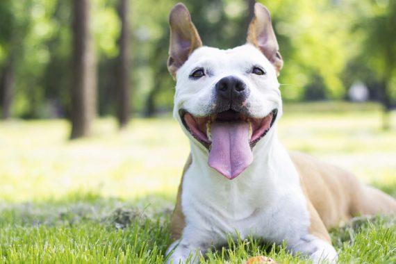 Perro sentado sobre el cesped y muy feliz y relajado