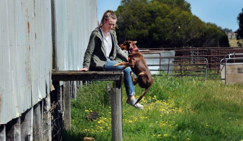 Perro saltando junto a su dueña que esþa sentada en lo alto