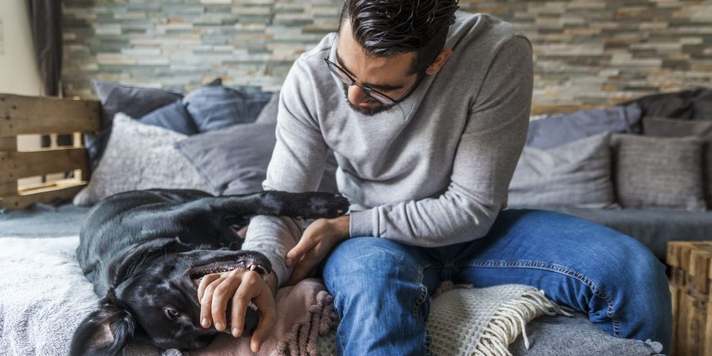 Foto de un perro sobre la cama jugando con su dueño mientras le muerde la mano