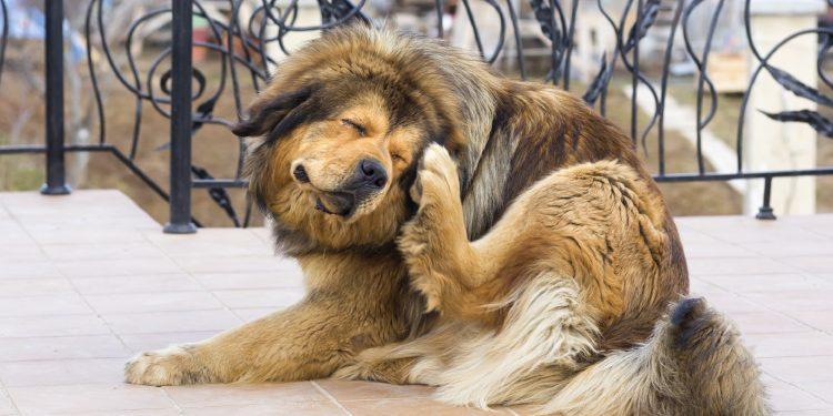 remedio casero para los gusanos en perros