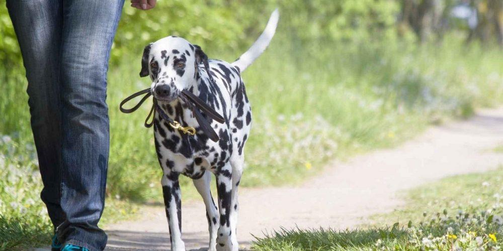 Foto de un perro paseando sin correa junto a su dueña