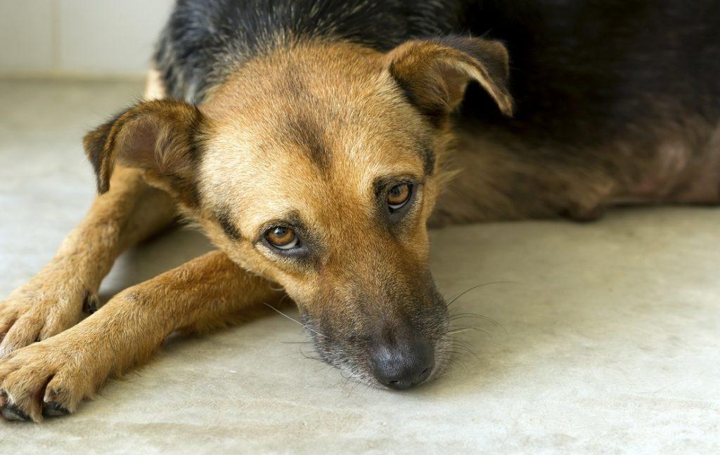 Perro en el suelo con mirada triste