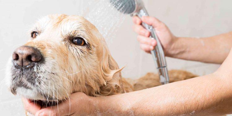 Foto de un perro que se queda quieto mientras lo están bañando