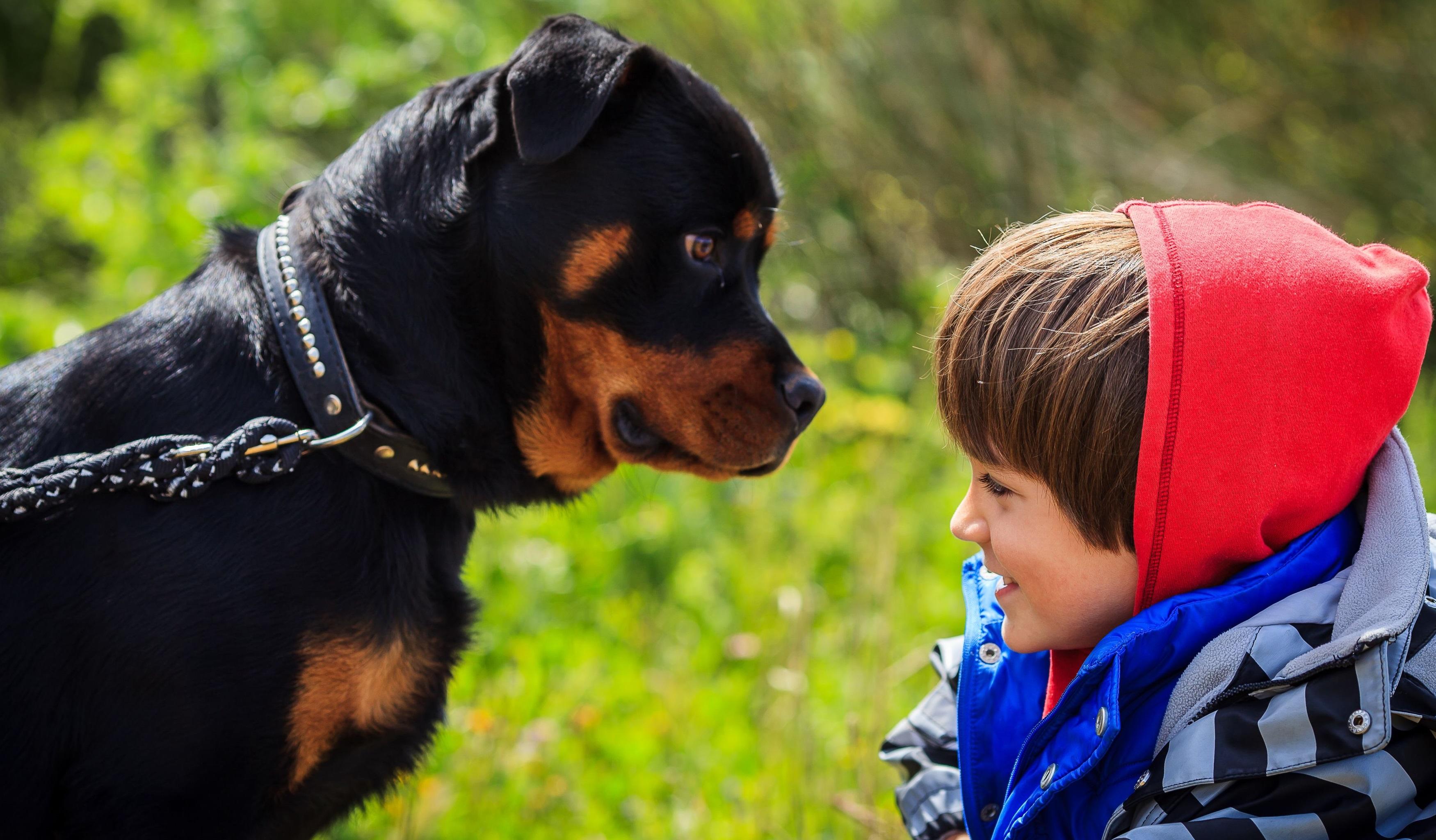 Foto de un rottweiler junto a un niño