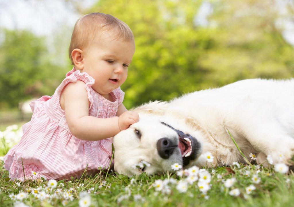 Bebe acariciando a un perro que se encuentra tumbado en la hierba