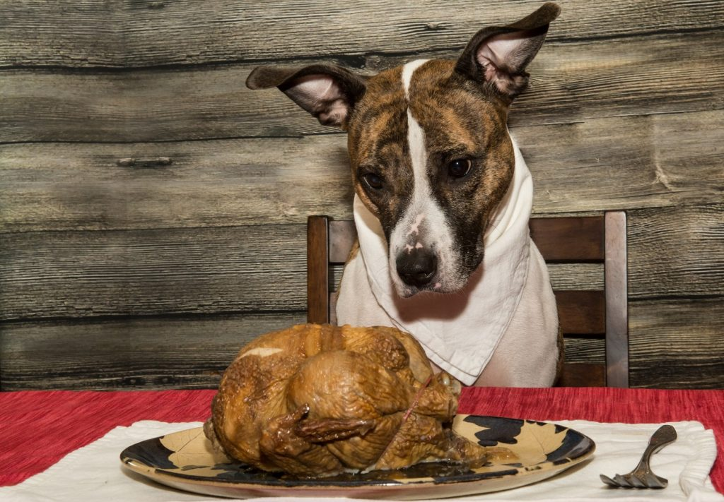 Perro mirando un pollo asado al horno con cara de estar poco convencido de comerselo