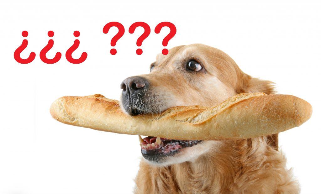 Perro con una barra de pan en la boca