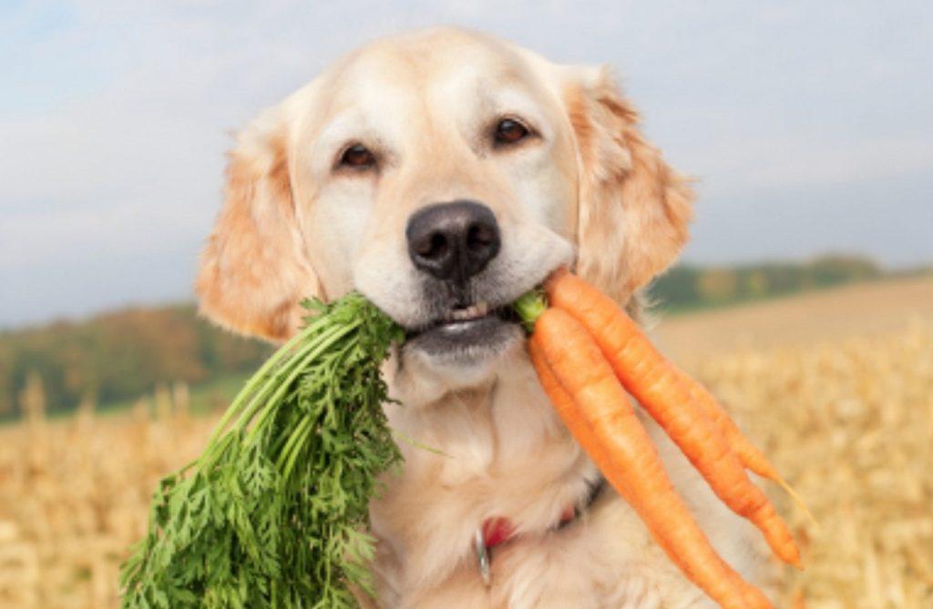 Perro con zanahorias en la boca
