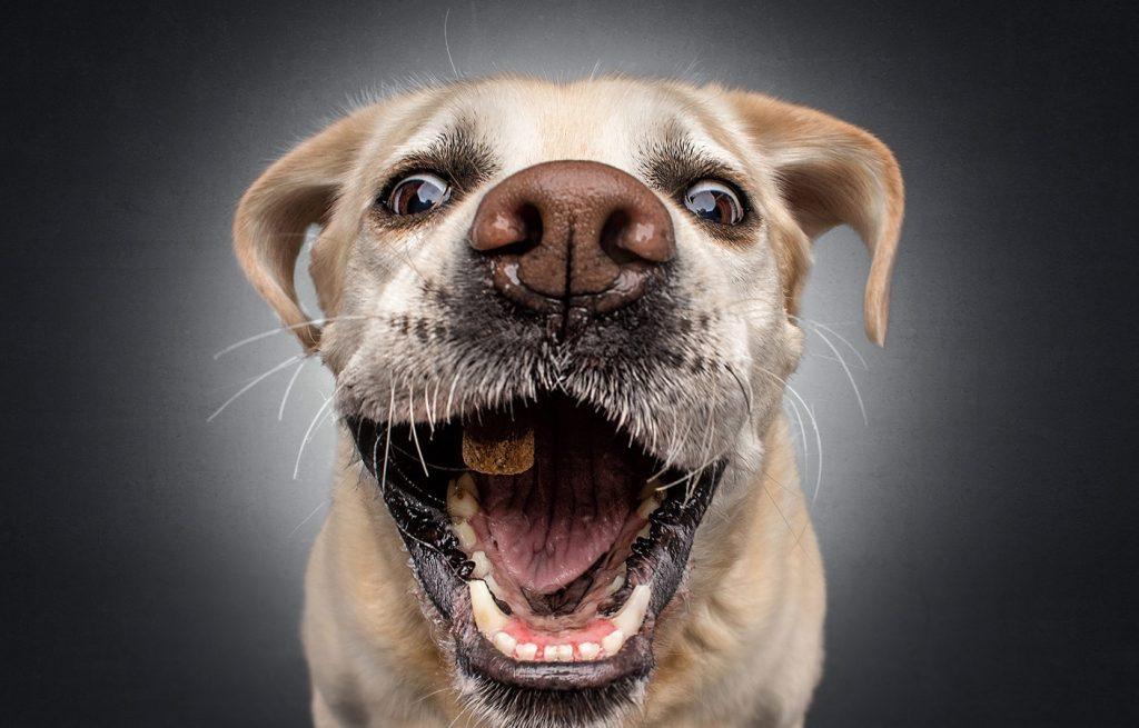 Perro comiendo una croqueta al vuelo
