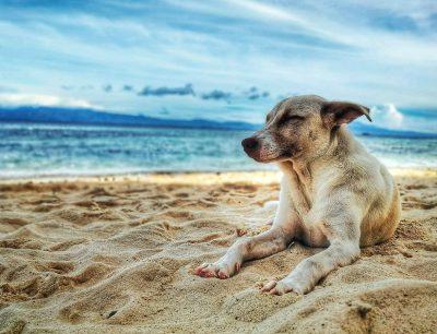 Disfruta con tu perro de la playa en Menorca en Cala des Gats