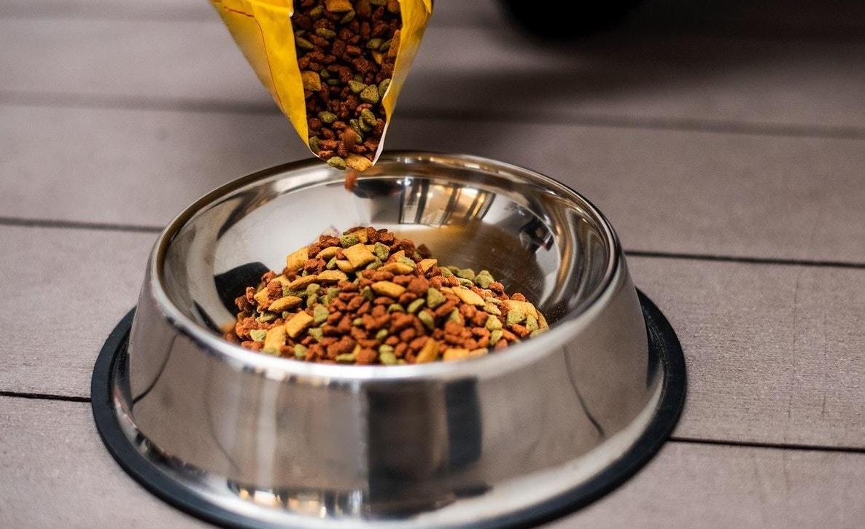 Bowl de comida de un perro llenándose con croquetas para perros con problemas de diabetes