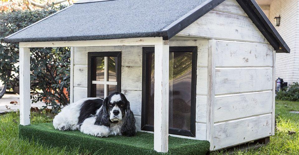 casas para perros redcanina