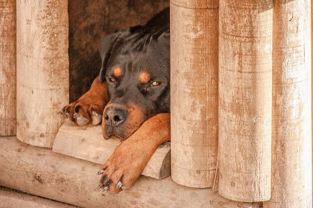 casas de madera para perros grandes