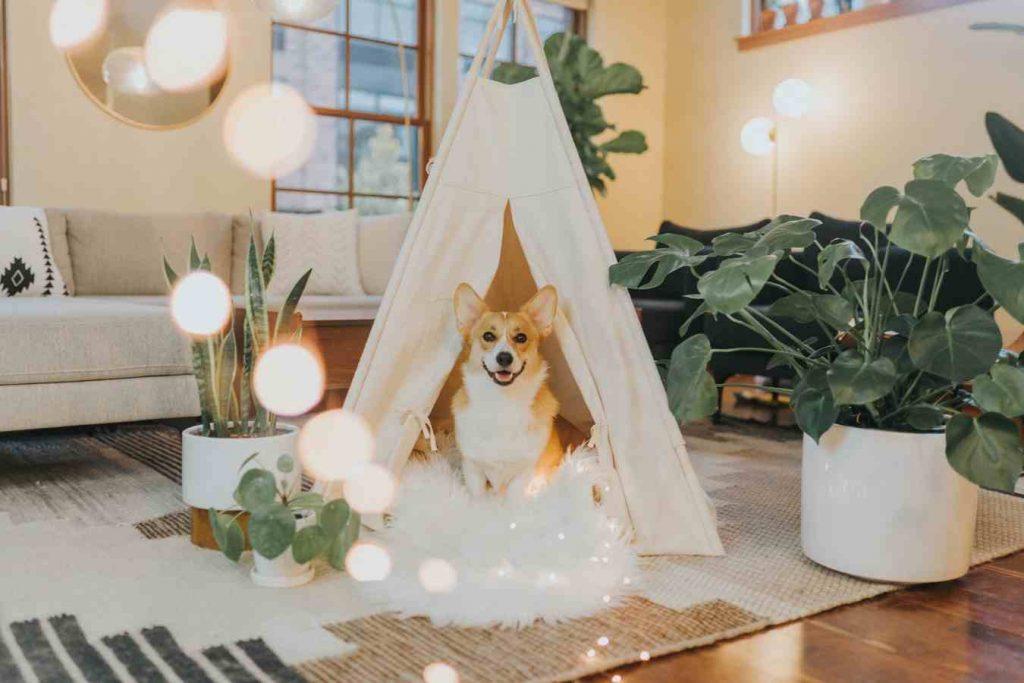 casas para perros lona