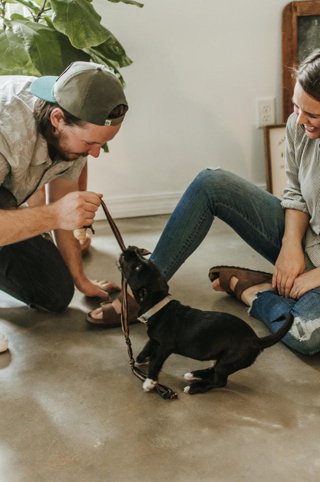 casas para perros pequeños cachorros