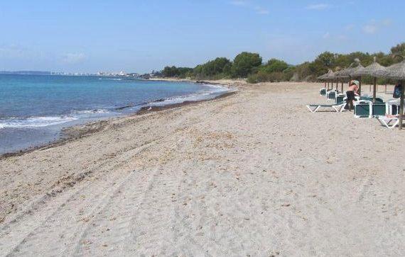 Playa Sa Marjal, playa para perros en Son Servera