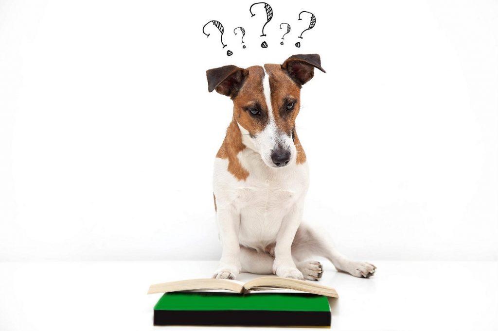 Perro consultando una guía y dudando qué hacer