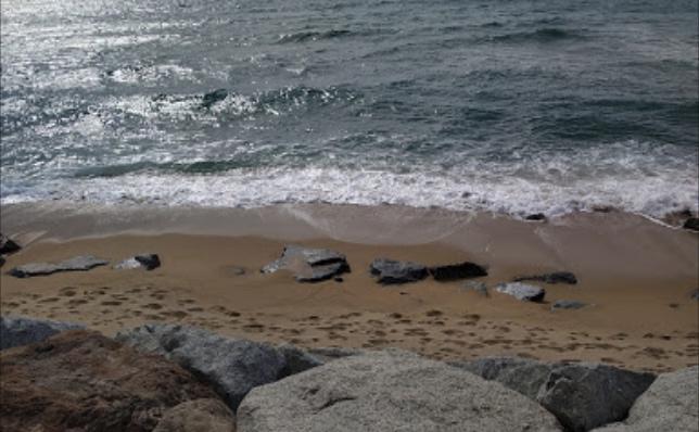 playa para perros entre masnou y montgat en Barcelona