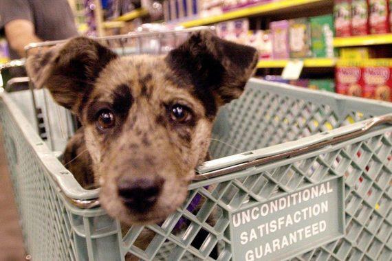 Perro en el carro de un supermercado mientras su dueño analiza las etiquetas de comida para perros