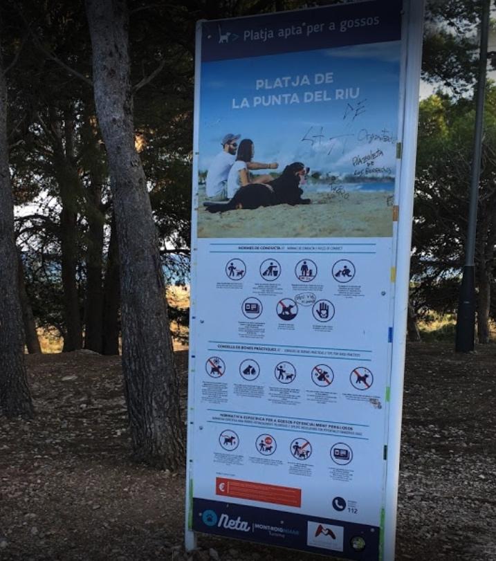 normas de la playa para perros