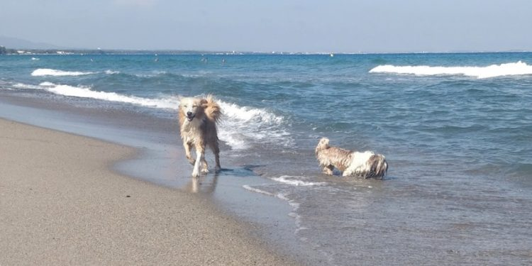 Playa para Perros de Punta del Riu en Miami Platja Montroig Tarragona
