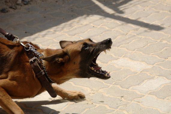 Qué consecuencias e indemnizaciones tienes si tu perro muerde a otras personas