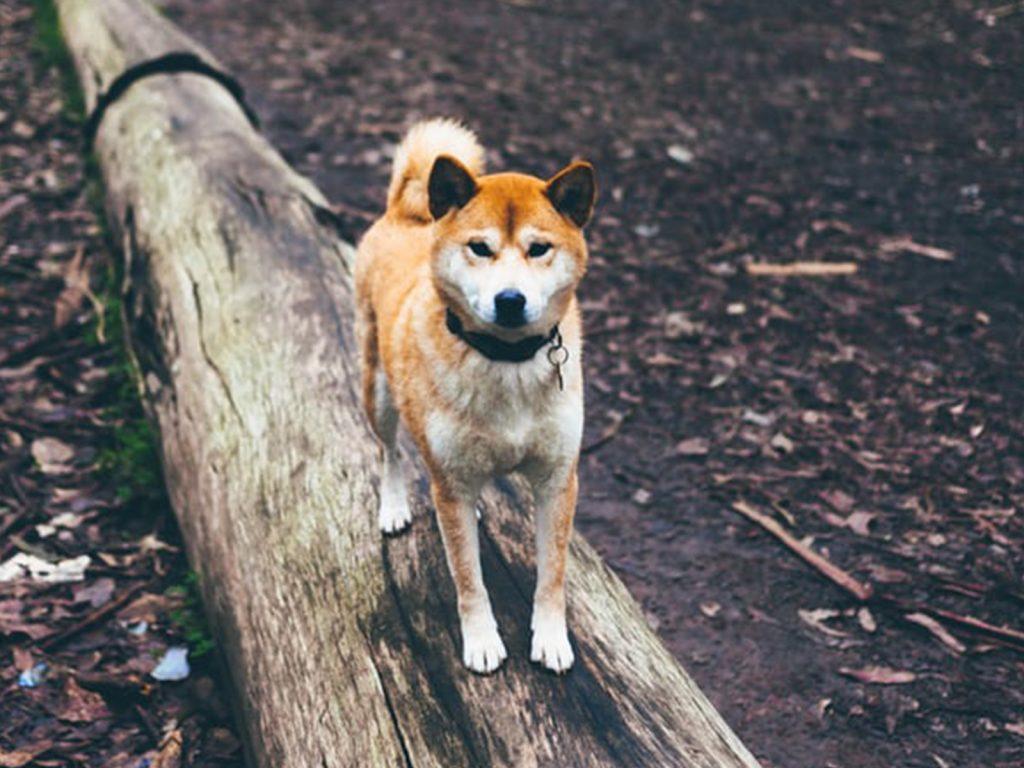 perro sobre tronco