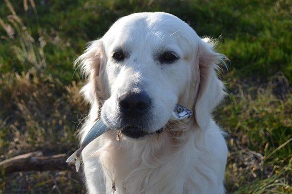 Alimentación natural para perros con inflamación intestinal