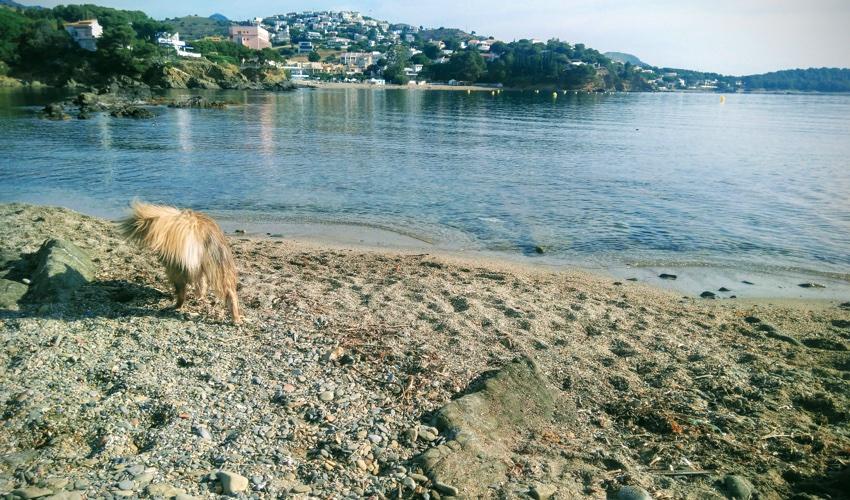 Playa para Perros de Sant Jordi en Llançà Girona en Costa Brava