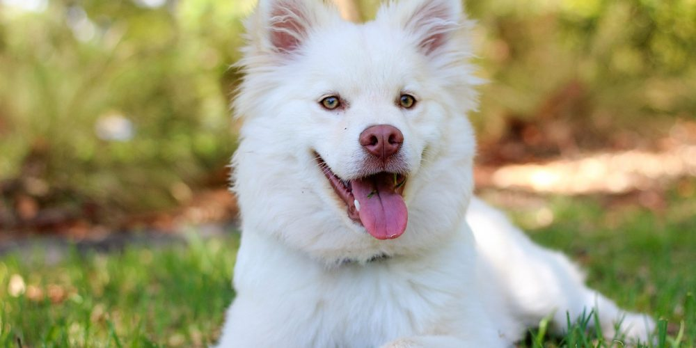 Pirámide De Maslow: Necesidades Básicas Del Perro