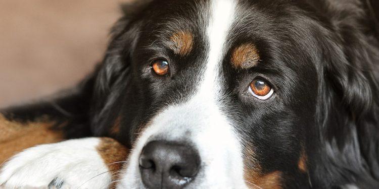 Las mejores croquetas para perros con problemas digestivos