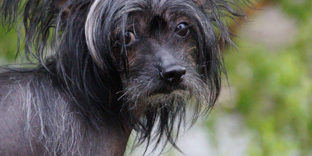 Los Mejores Piensos Y Croquetas Para Perros Con Hipotiroidismo